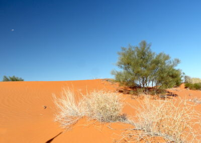 One of the 500 sand dunes in the Simpson Desert French Line